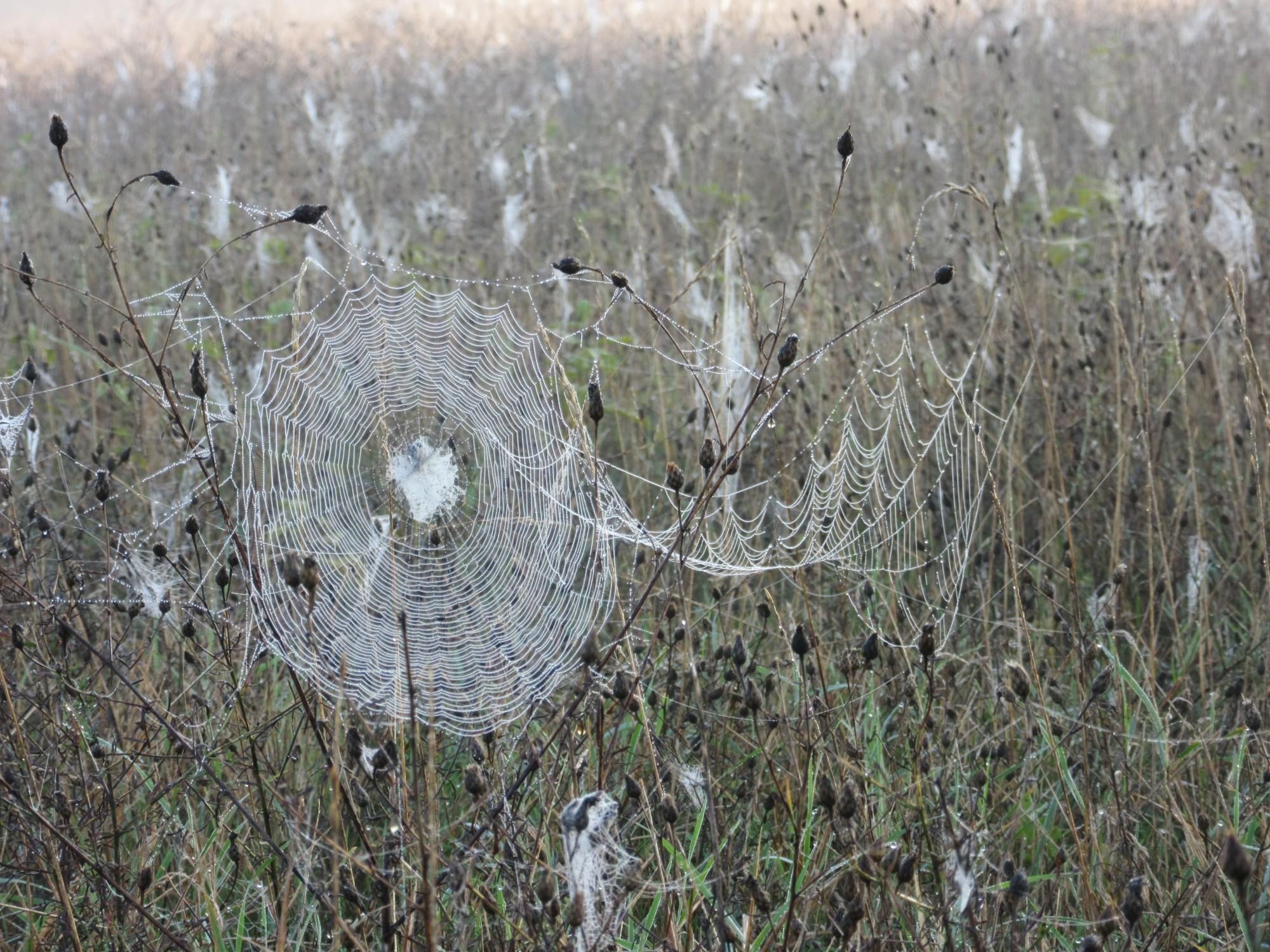 A wet web...