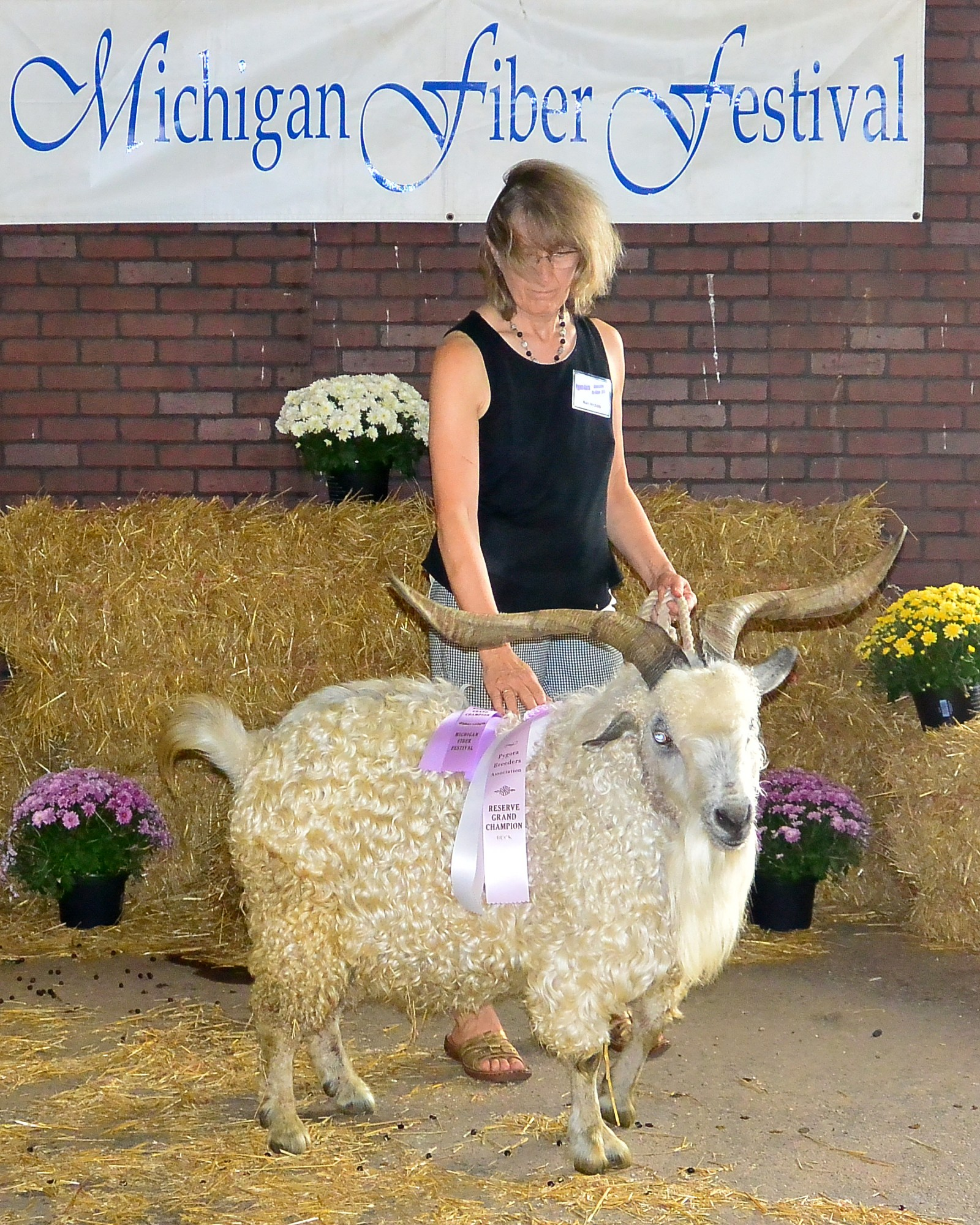 Gun Plain Pygoras Abe took Reserve Grand Champion buck at the 2015 Michigan Fiber Festival.