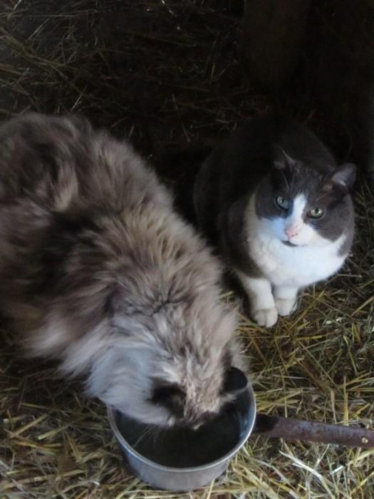 "Two old cats enjoying morning ""goat tea""..."